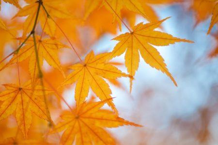 【営業】年末は31日まで営業。1日・2日と連休して3日(木)より通常営業致します!!