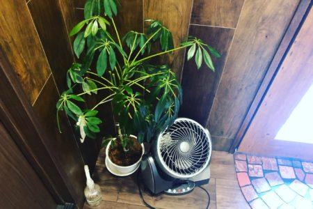 観葉植物を頂いたので「しっかり育てよう!」と育て方を調べました